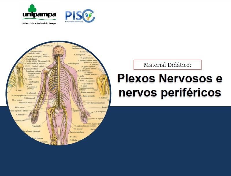 capa plexos nervosos (1)